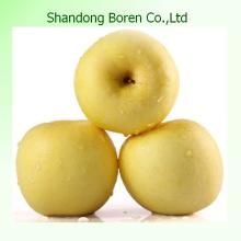 Сорт сладкое свежее золотое яблоко