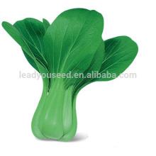 PK08 Zhonghua très tôt maturité hybride pakchoi graines dans les graines de légumes