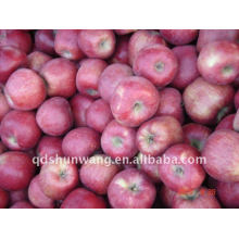 2011 new crop hua niu red apple