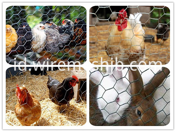 Chicken Livestock Wire Mesh