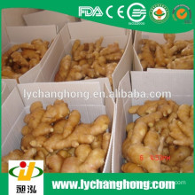hot sale high quality air dried ginger