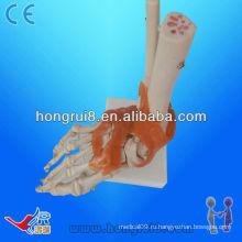 Сундук с суставной каркасной каркасной ножкой для человека