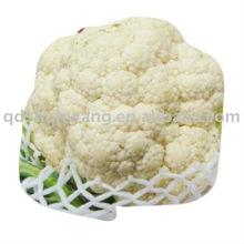 Chino fresco blanco coliflor
