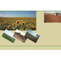 Edible sunflower seeds from Inner Mongolia