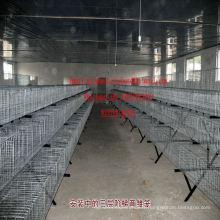 Cage animale industrielle de cage de volaille de cage de lapin en acier