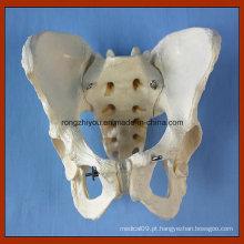 Adulto modelo feminino de modelo de pelve Modelo de modelo anatômico