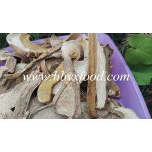 Preço competitivo de cogumelos porcinos secos