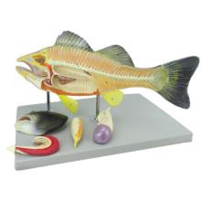 Compre un pez animal 12011, modelo anatómico de perca de plástico de 5 piezas
