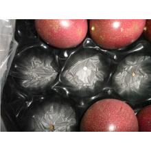 Bandeja plástica de empacotamento exportada bolha perfurada Thermoformed da fruta para o fruto de pedra fresco feito em China