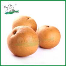 Экспорт новых свежих fengshui груша / Китай Delicious Nashi груша