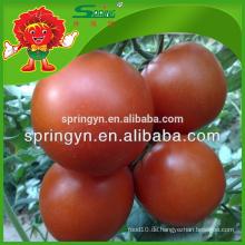 100% natürliche Pflanzung Kristall rote Tomate eine Tomate aus China