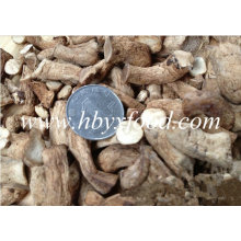 Hot Sale Dried Mushroom Leg with Halal Certificate