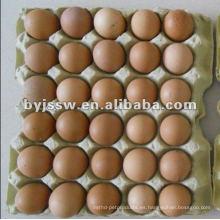diseño de bandeja de huevos apilable