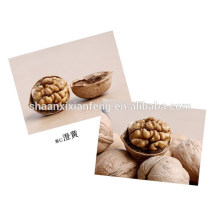 Walnut Is Shell For Hot Sale /High Quality With Good Price