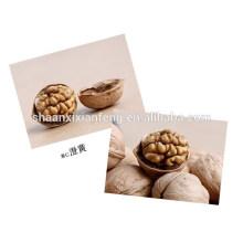 Noz é shell para venda quente / alta qualidade com bom preço