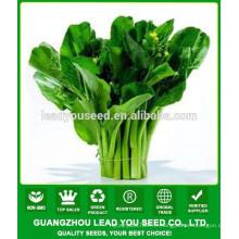 NCS04 Zuicha Meilleur choy sum graines chinoises usine de graines