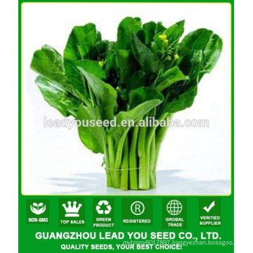 NCS04 Zuicha Best choy sum seeds chinese seeds factory