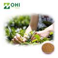 Instant Matcha Green Tea Powder