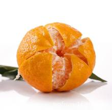 New Product for Fresh Apricot Baladi 5kg carton mandarin oranges supply to Central African Republic Importers