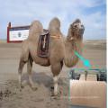 guata de pelo de camello para el relleno de prendas de vestir