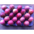 New Crop Fresh Apple/ Chines Fruits of High Quality