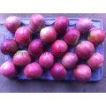 Новый урожай свежее яблоко / хребтовые плоды высокого качества