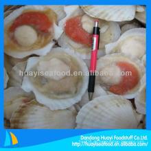Jakobsmuscheln Meeresfrüchte