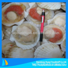 scallop seafood