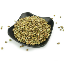 Plastic industrial hemp seed Natural growth