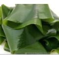 fournisseur premium wakame