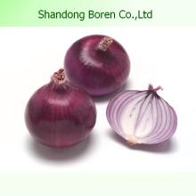 2015 China neue Jahreszeit frische rote Zwiebel