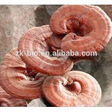 Venta caliente Organic Ganoderma Lucidum Slice
