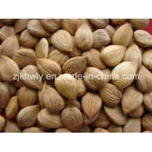 Amêndoa doce (youyi 780-800 PCS / 500g)