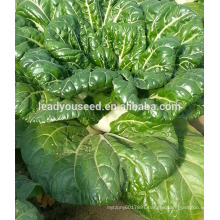 MCC03 Wugan early maturity high yield chinese cabbage seeds