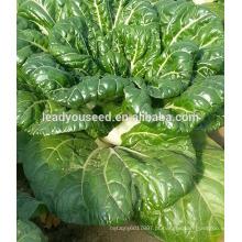MCC03 Wugan sementes de repolho chinês de alto rendimento maturação precoce