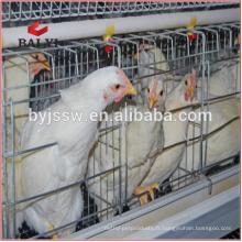 Cage de poulet de couche de volaille pour les fermes de poulet du Costa Rica