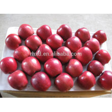 Chinese Tianshui Red Huaniu Apple/Sweet Re huaniu apple
