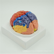 Горячей продажи высокое качество горизонтальная модель мозга