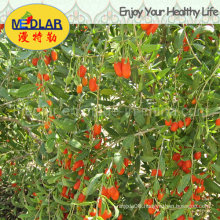Medlar Lbp Dried Ningxia Organic Wolfberry