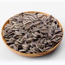 2021 Xinjiang Raw Natural dry large shape sunflower seeds