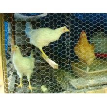 """2"""" Chicken Mesh"""