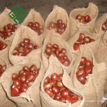 castanhas doces da China