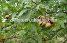 Sell Aesculus Hippocastanum Extract