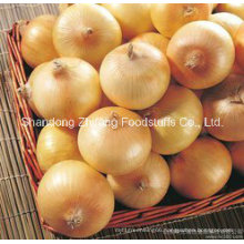 Chinese New Onion for Exporting