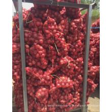 2016 Nouvelle culture d'oignons frais exportant