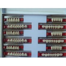 Малые тиристорные акриловые зубы для рынка Индии