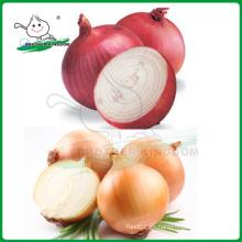 Cebolla roja / cebolla amarilla / cebolla fresca de precio más bajo