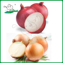 Red onion/Yellow onion/Lowest price fresh onion
