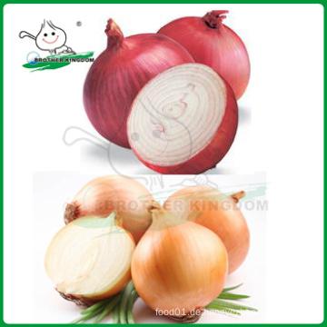 Rote Zwiebel / Gelb Zwiebel / Niedrigster Preis Frische Zwiebel