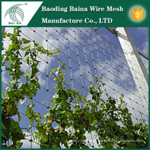 Climbing plant wall support stainless steel wire mesh fence